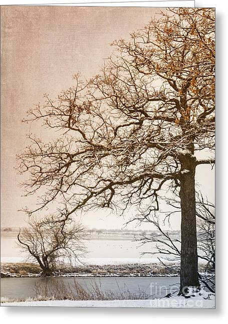 Bare Trees Digital Art Greeting Cards - The Beauty of Winter Greeting Card by Betty LaRue