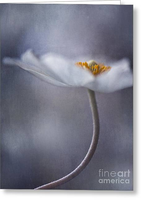 Dusty Blue Greeting Cards - The Beauty Within Greeting Card by Priska Wettstein