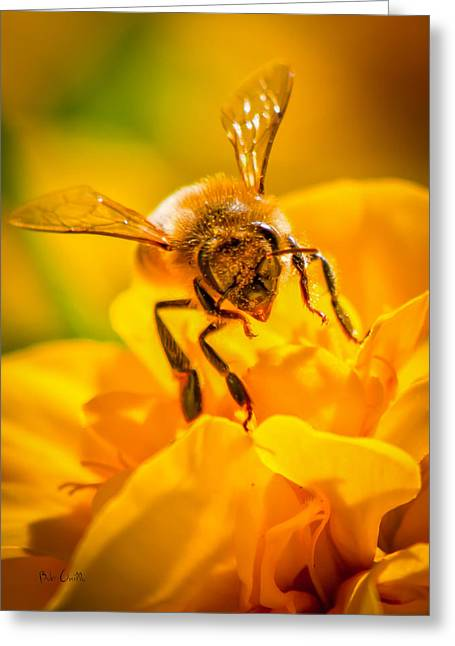 Wildlife Photography Greeting Cards - The Bee gets its pollen Greeting Card by Bob Orsillo