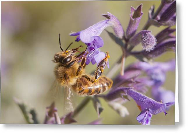 Secret Gardens Greeting Cards - The Bees Knees Greeting Card by Caitlyn  Grasso