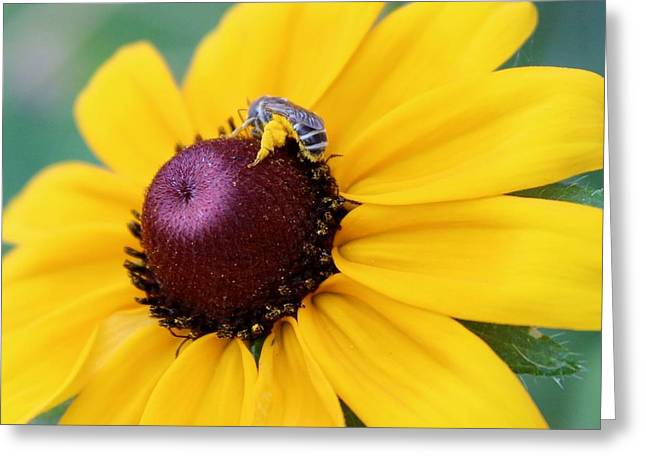The Nature Center Greeting Cards - The Bees Knees Greeting Card by Elizabeth Sullivan