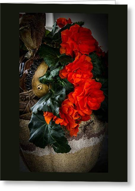 Photo Art Gallery Greeting Cards - The Begonia Greeting Card by Thom Zehrfeld