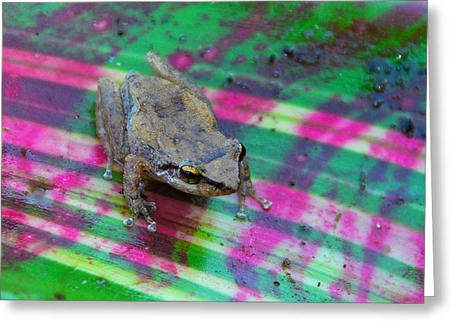 Coqui Greeting Cards - The Beloved Coqui Frog Greeting Card by Alan Lenk