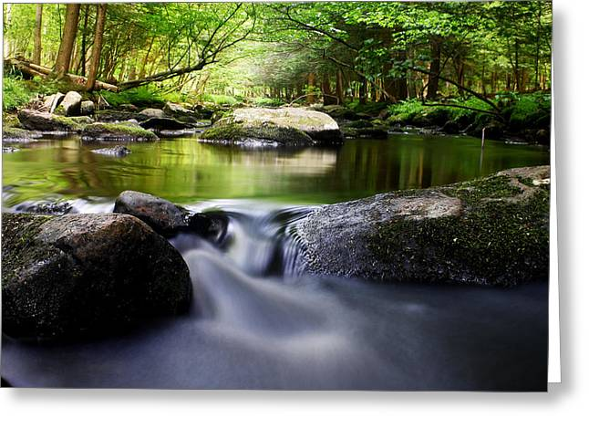 Stokes State Forest Greeting Cards - The Big Flatbrook Greeting Card by Dawn J Benko