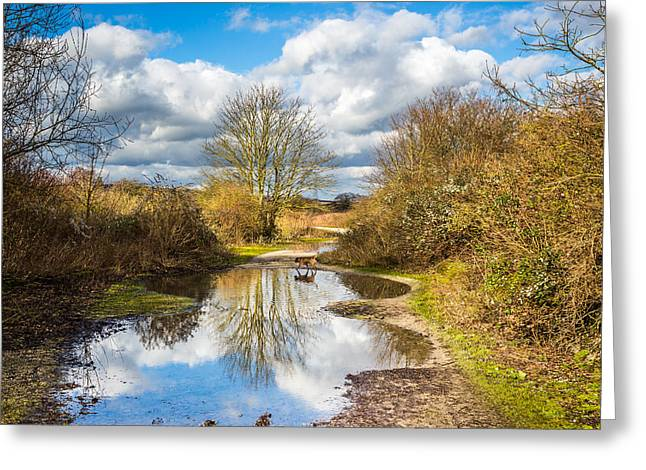 Puddle Greeting Cards - The Big Puddle Greeting Card by Gary Gillette
