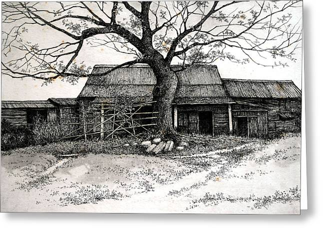 Barn Door Pyrography Greeting Cards - The Big Tree Greeting Card by Joseph Wong