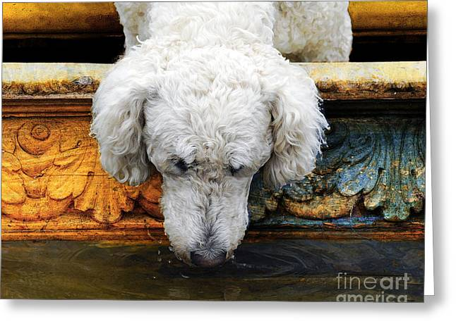 Judy Wood Digital Greeting Cards - The Big Water Bowl Greeting Card by Judy Wood