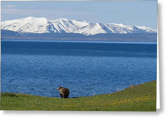 Yellowstone National Park Greeting Cards - The Big Wide Open Greeting Card by Sandy Sisti