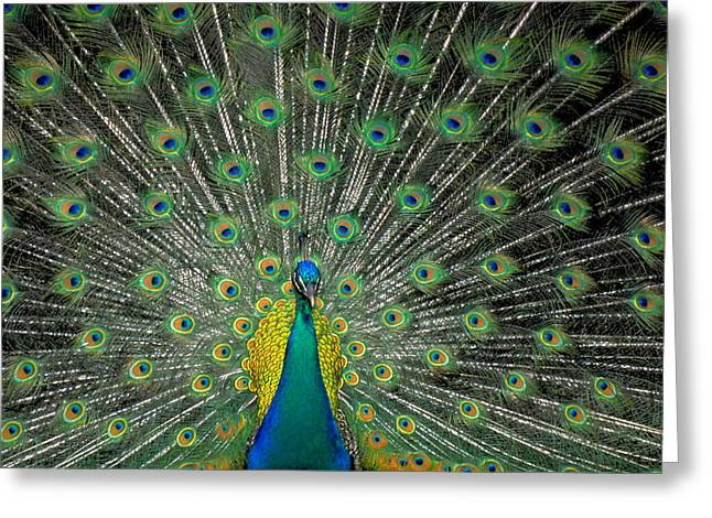 Psychedilic Greeting Cards - The Bird of a Thousand Eyes Greeting Card by Carl Purcell