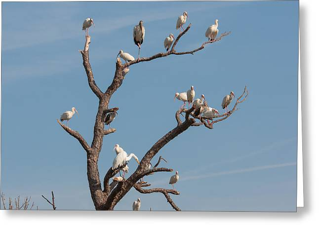 Bird Congregation Greeting Cards - The Bird Tree Greeting Card by John Bailey