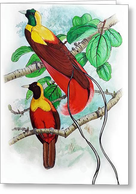 Mayur Sharma Greeting Cards - The Birds of Paradise Greeting Card by Mayur Sharma