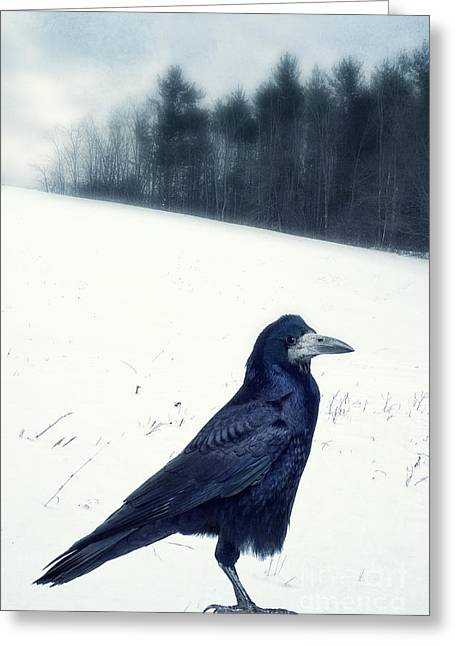 Rook Greeting Cards - The Black Crow Knows Greeting Card by Edward Fielding