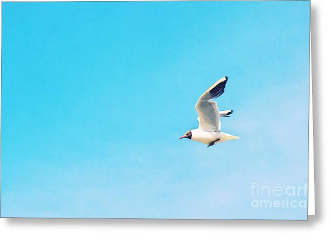 Flying Gull Greeting Cards - The Black Headed Gull Greeting Card by Angela Doelling AD DESIGN Photo and PhotoArt