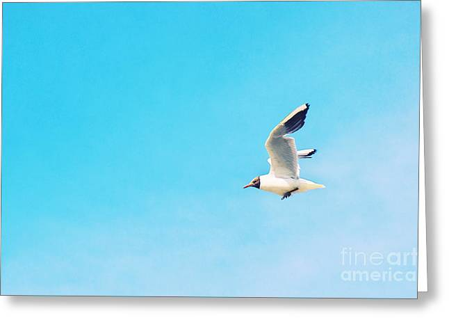 Flying Gulls Greeting Cards - The Black Headed Gull Greeting Card by Angela Doelling AD DESIGN Photo and PhotoArt