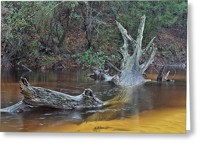 Florida Panhandle Greeting Cards - The Black Water River Greeting Card by JC Findley