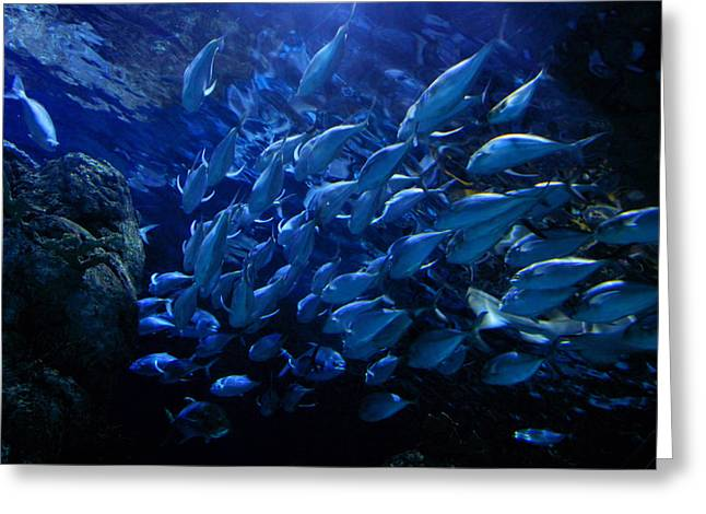 Flounder Greeting Cards - The Blue Lagoon Greeting Card by Linda Unger
