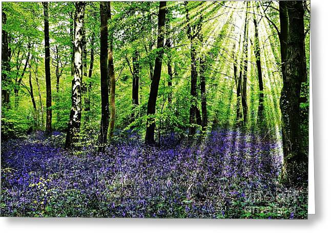 Morag Bates Greeting Cards - The Bluebell Woods Greeting Card by Morag Bates