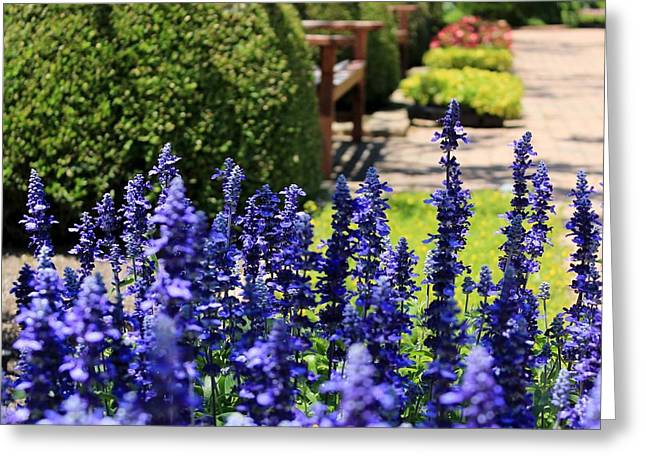 Ewing Greeting Cards - The Blues in the Garden Greeting Card by Elizabeth Sullivan
