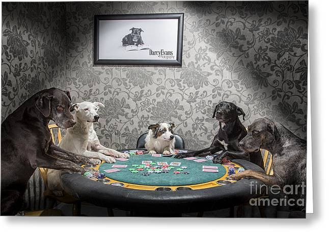 Dog Photographs Greeting Cards - The Bluff Greeting Card by Darcy Evans