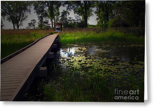 Nature Center Pond Greeting Cards - The Boardwalk Greeting Card by Cedric Hampton