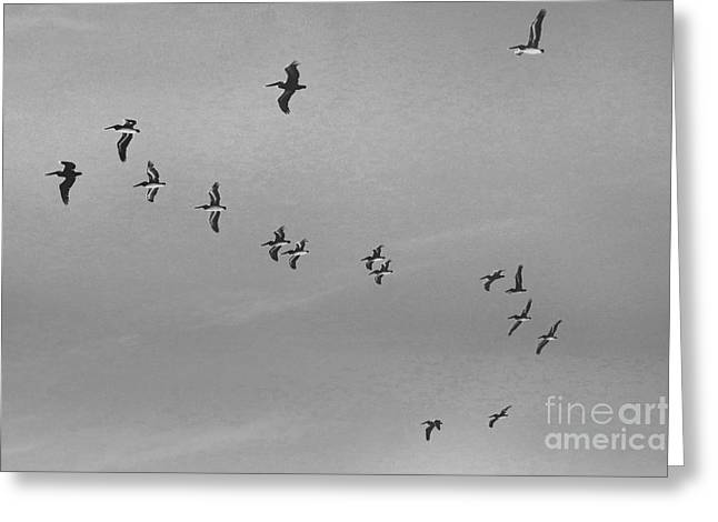 Flock Of Flying White Pelicans Greeting Cards - The Bomb Squad Greeting Card by Scott Cameron