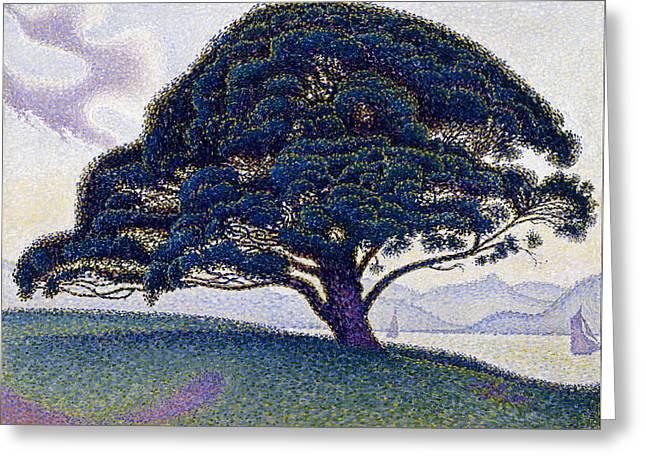 Bonaventure Greeting Cards - The Bonaventure Pine Greeting Card by Paul Signac
