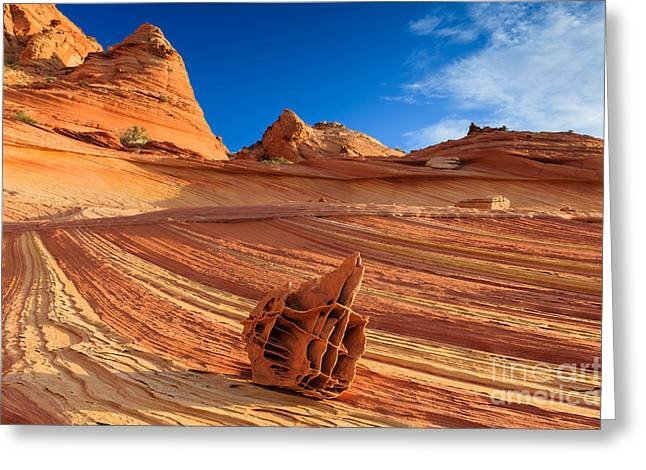Bone Yard Greeting Cards - The Bone Yard in the North Coyote Buttes Greeting Card by Henk Meijer Photography