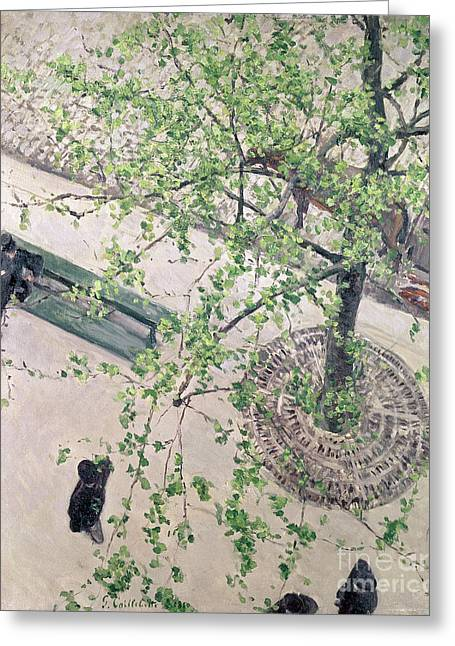 Park Benches Paintings Greeting Cards - The Boulevard Viewed from Above Greeting Card by Gustave Caillebotte