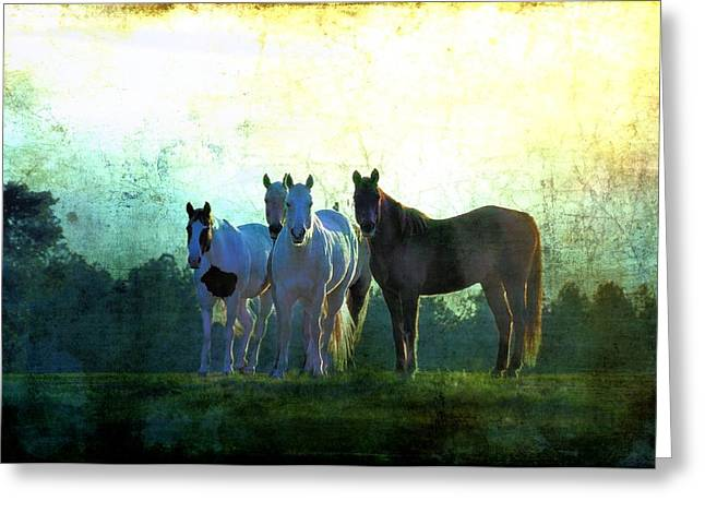 Quarter Horse Digital Art Greeting Cards - The Boys Greeting Card by Jan Amiss Photography