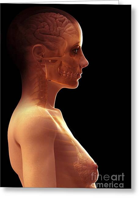 Frontal Bones Greeting Cards - The Brain Female Greeting Card by Science Picture Co