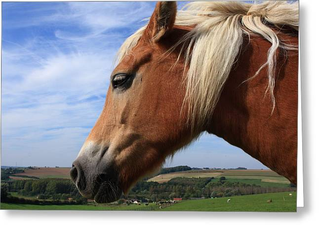 Horse Images Greeting Cards - The Breton Greeting Card by Aidan Moran