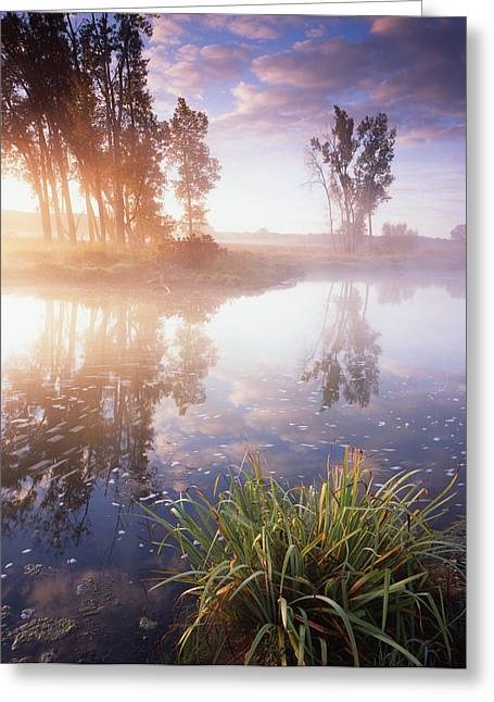 Hack-ma-tack National Wildlife Refuge Greeting Cards - The Bright Light Greeting Card by Ray Mathis