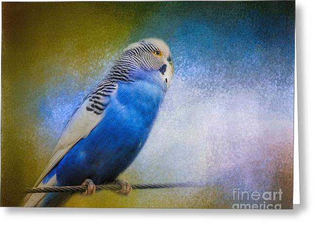 The Budgie Collection - Budgie 2 Greeting Card by Jai Johnson