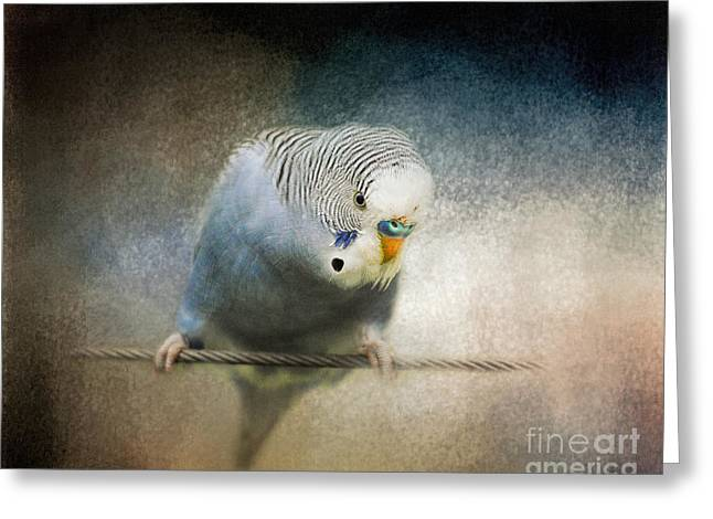 The Budgie Collection - Budgie 3 Greeting Card by Jai Johnson