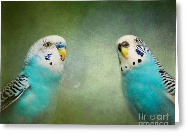 The Budgie Collection - Budgie Pair Greeting Card by Jai Johnson