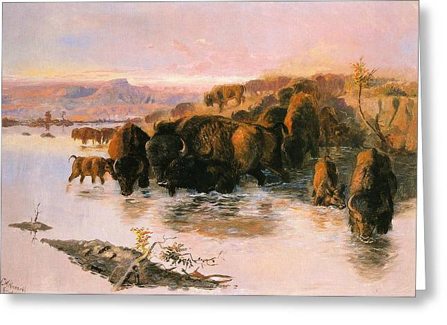 The Buffalo Herd Greeting Card by Charles Russell