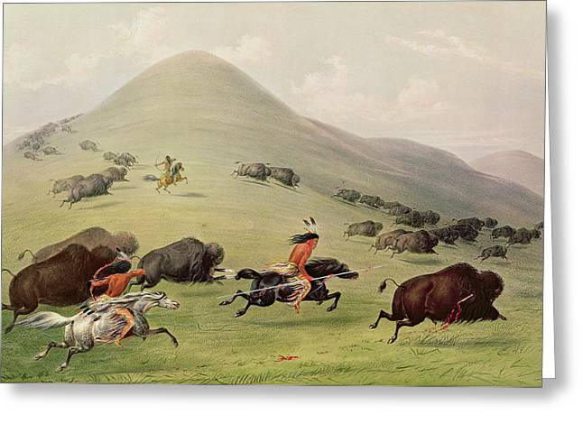 The American Buffalo Paintings Greeting Cards - The Buffalo Hunt Greeting Card by George Catlin