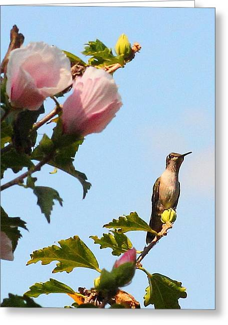 Althea Greeting Cards - The Buffet Greeting Card by Karen Beasley