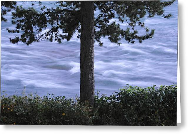 British Columbia Greeting Cards - The Bulkley River Greeting Card by Mary Lee Dereske