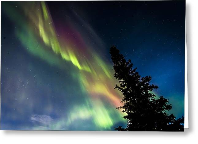 Northernlights Greeting Cards - The Burning Tree 2 Greeting Card by Kyle Lavey