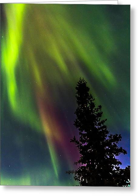 Northernlights Greeting Cards - The Burning Tree Greeting Card by Kyle Lavey