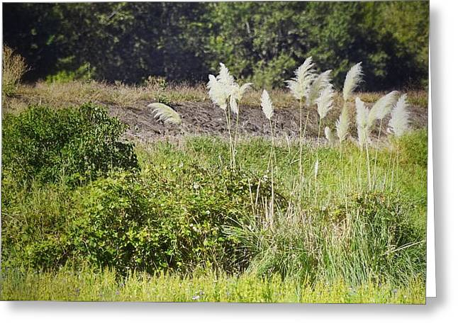 Sauvie Island Greeting Cards - The Bushes Greeting Card by Image Takers Photography LLC - Carol Haddon