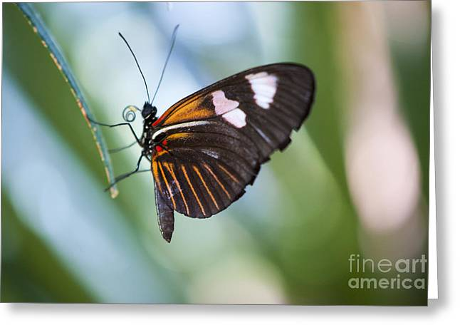 Antenna Greeting Cards - The Butterfly Effect Greeting Card by Juli Scalzi