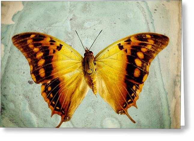 The Butterfly Project 6 Greeting Card by Diane Miller