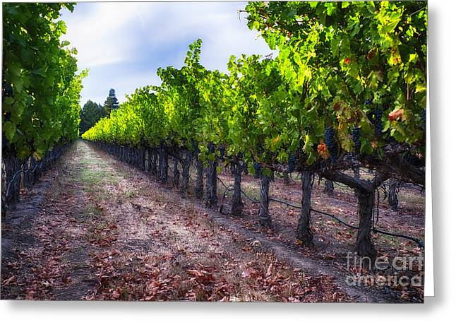 Bunch Of Grapes Photographs Greeting Cards - The Cabernet is Ready Greeting Card by George Oze