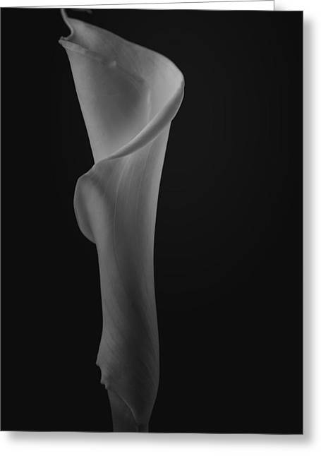Calla Lily Greeting Cards - The Calla Lily Flower in Black and White Greeting Card by David Haskett