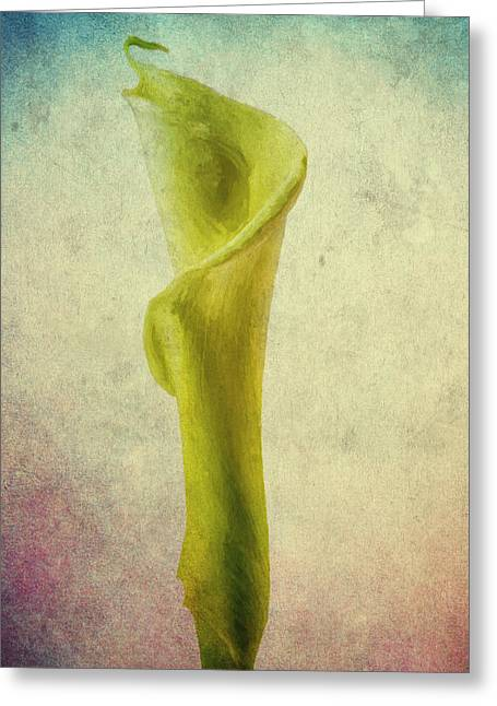 Indiana Roses Greeting Cards - The Calla Lily Flower in Texture Greeting Card by David Haskett
