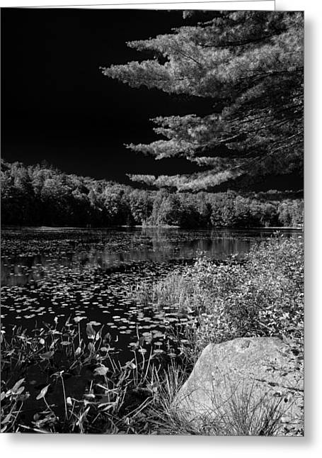 Old And New Greeting Cards - The Calm of Cary Lake Greeting Card by David Patterson