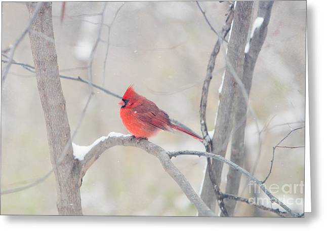 Red Bird In Snow Greeting Cards - The Cardinal Greeting Card by Kay Pickens