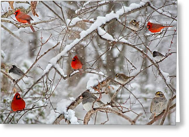 The Cardinal Rules Greeting Card by Betsy C Knapp